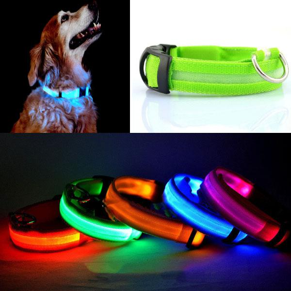 Collier Chien Lumineux Led Promenade tranquille Nuit