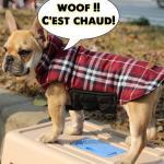 Manteau chaud Chiens Petits et Grands Reversible Carreaux Hiver Bouledogue Labrador